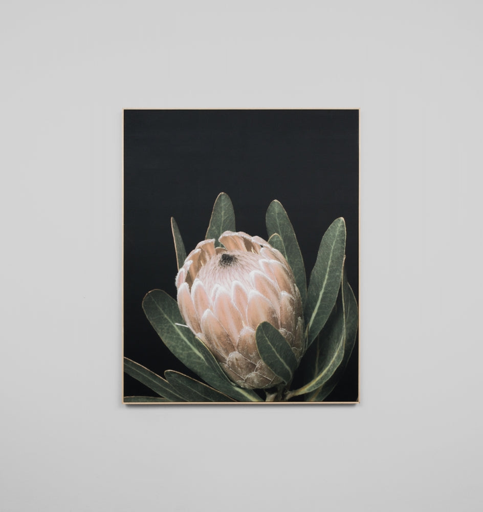 Splendour Canvas Art - Protea Bloom I