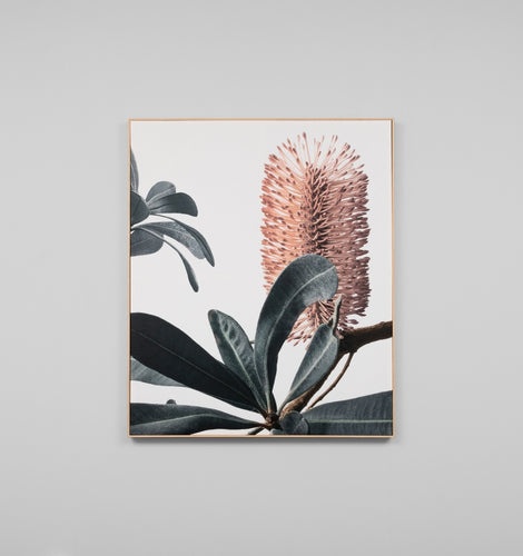 Splendour Canvas Art - Banksia II