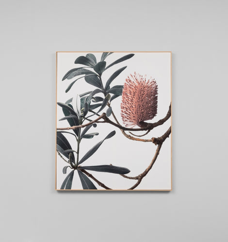 Splendour Canvas Art - Banksia I