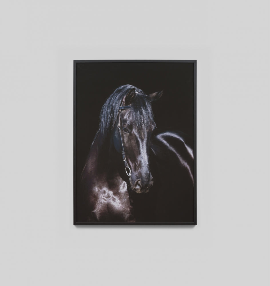 Splendour Framed Art - Black Stallion