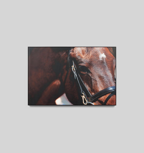 Splendour Canvas Art - Bridle