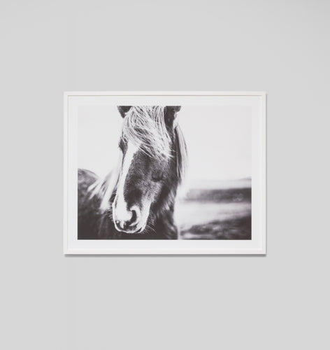 Splendour Framed Art - Equine Blaze