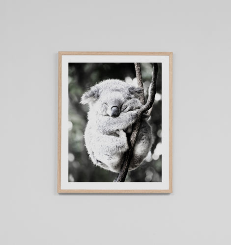 Splendour Framed Art - Koala Friend