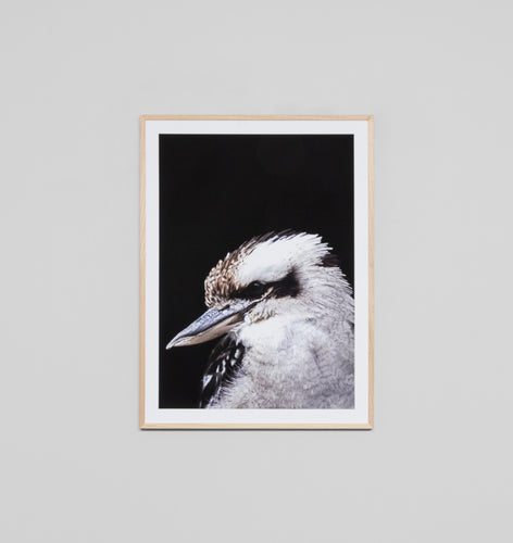 Splendour Framed Art - Kookaburra Black