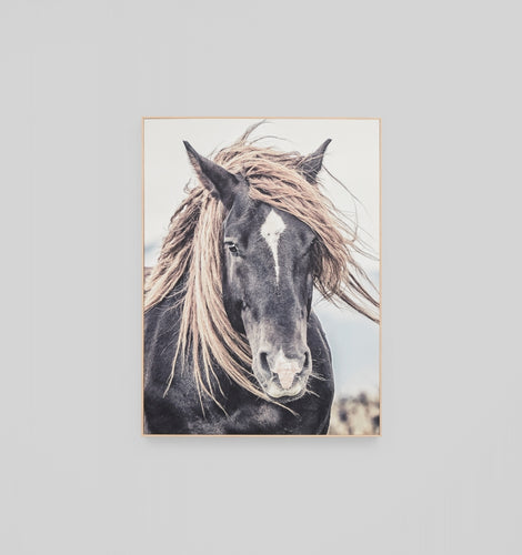 Splendour Canvas Art - Long Mustang