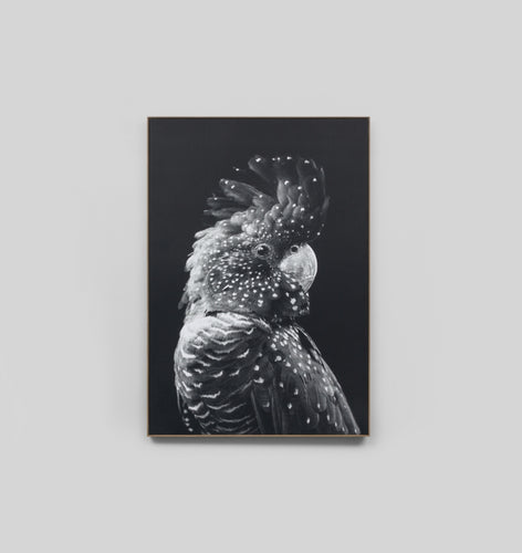 Splendour Canvas Art - Black Cockatoo