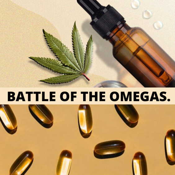 BATTLE OF THE OMEGAS: Hemp Seed Oil vs. Fish Oil