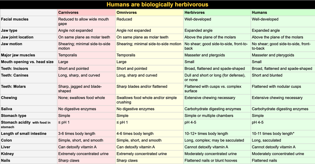 Biological structure of humans