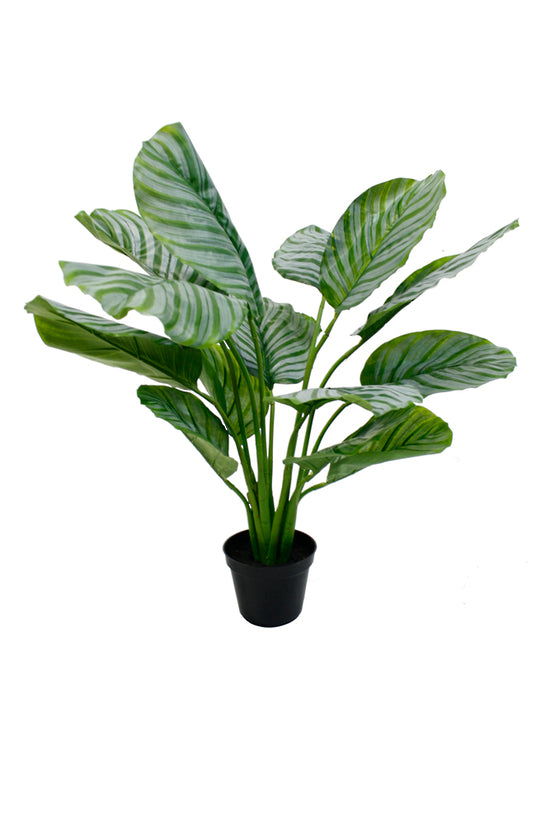 Faux Plant Potted Calathea