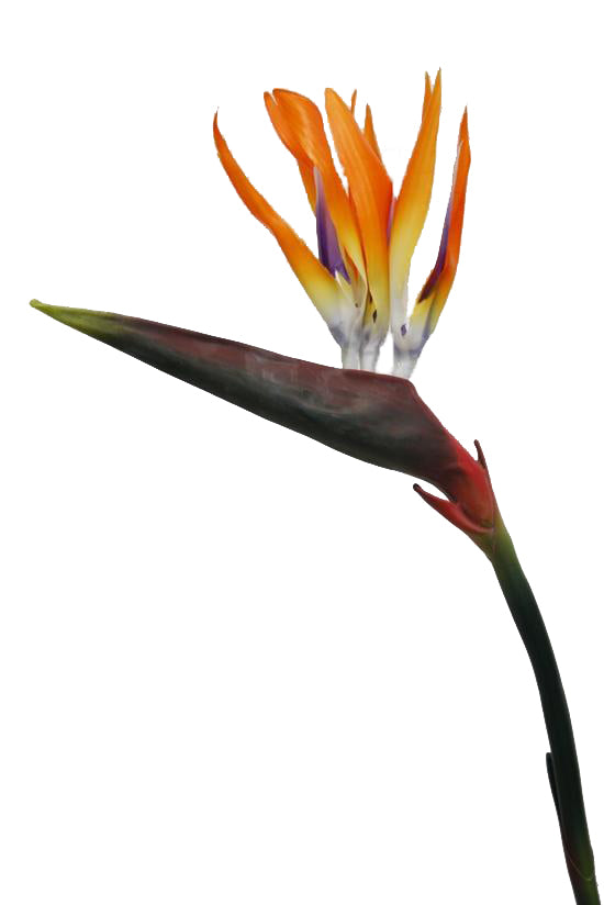 Faux Plant Birds Of Paradise Orange