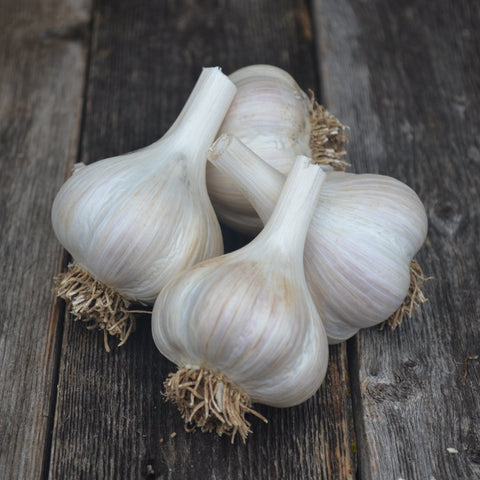 Music Garlic-Culinary
