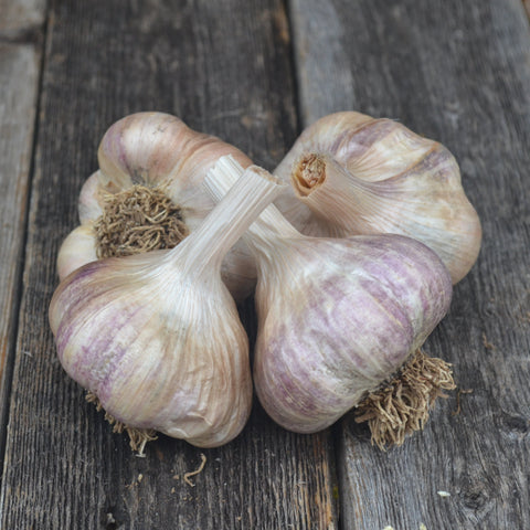 Polish White Garlic-Culinary
