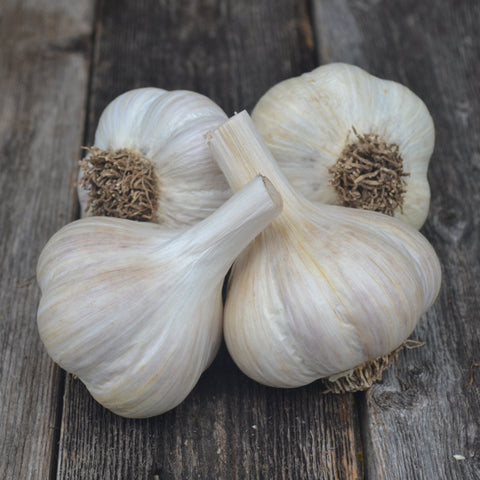 Romanian Red Garlic-Culinary