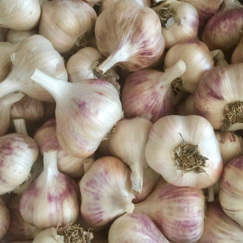Inchellium Red Garlic