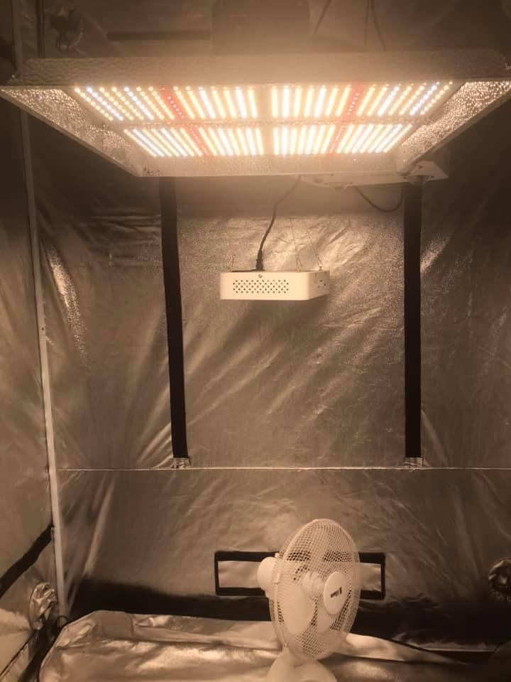 Q1 Quantum Board LED kit, 1.2m x 2m Tent, Whiti Smart Grow kit Whiti Smart Solutions