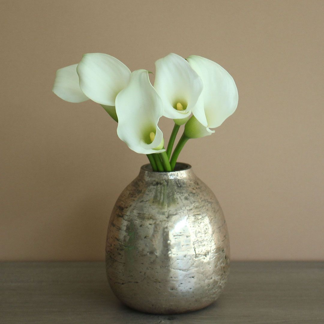 The Elegance And Care Of Calla Lilies