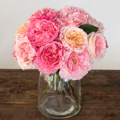All Things Pink Assorted Mayra Garden Roses