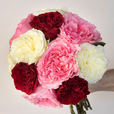 Shades of Love Red and Pink Mayra Garden Roses