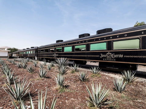 Jose Cuervo Express To Tequila Jalisco Mexico