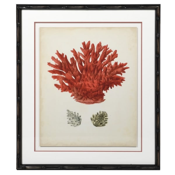 Coral Picture with black frame