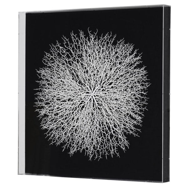 Coral Wall Art - Black Background