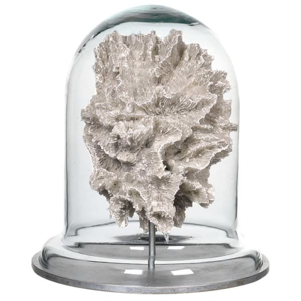 Coral in Glass Dome