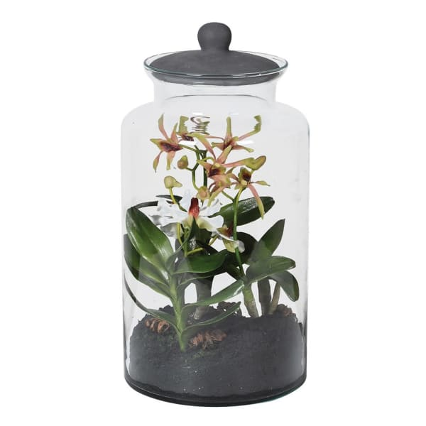 Mixed Mini Orchids in Glass Terrarium Jar