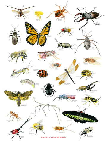 Bug Chart Print By Christine Berrie