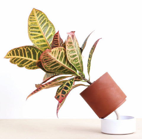 Jeannot Self-Watering Plant Pot