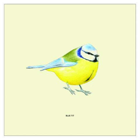 Blue Tit Bird Cushion Cover By Christine Berrie