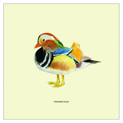 Mandarin Duck Bird Cushion Cover By Christine Berrie