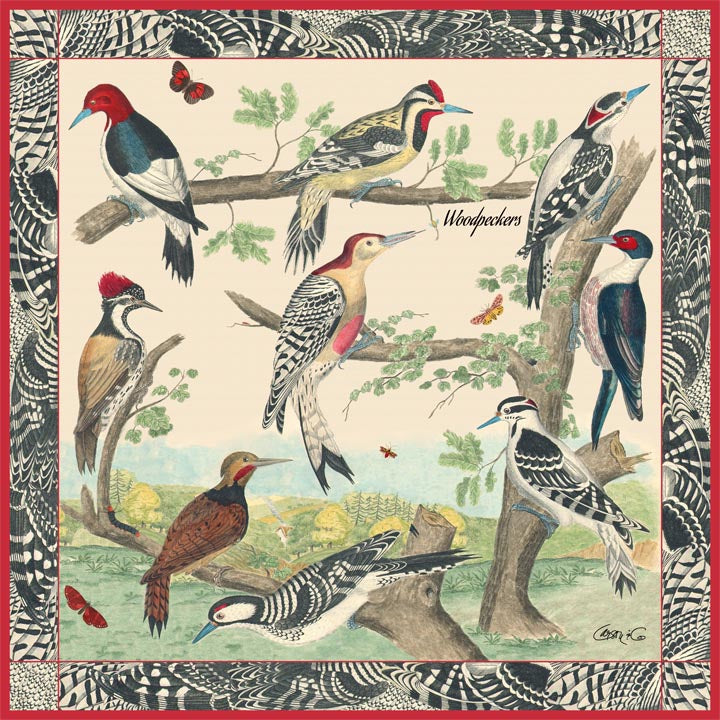 Woodpeckers Scarf