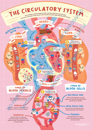 Circulatory System: Art in Heart