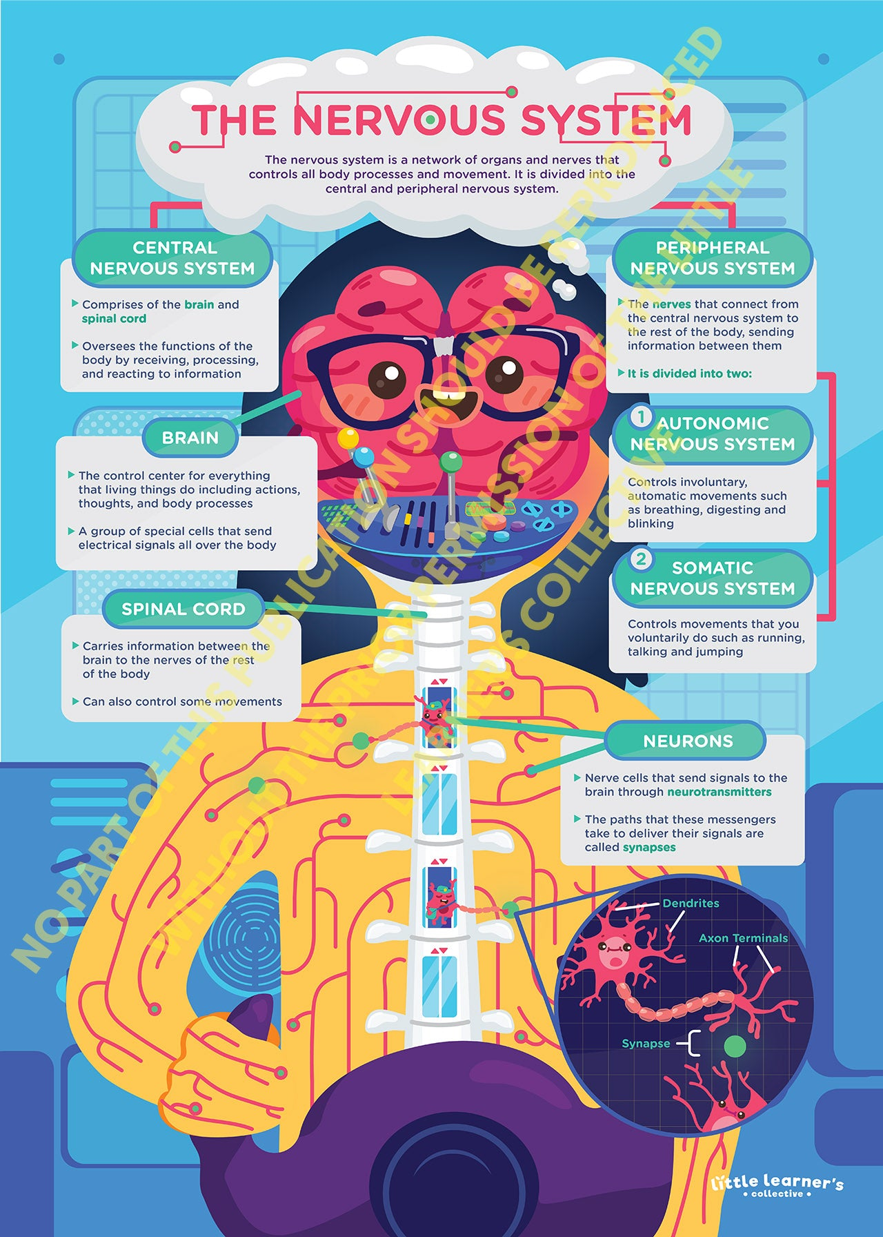 Nervous System: The Human's Control Room