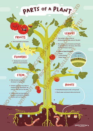 Plant Anatomy: From Leaves to Roots