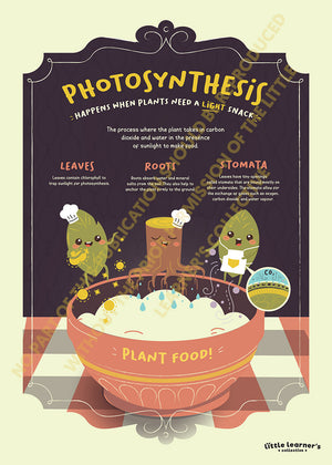 Photosynthesis with the Little Chefs