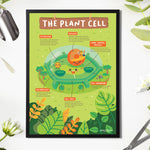 Plant Cell: What's Behind that Wall