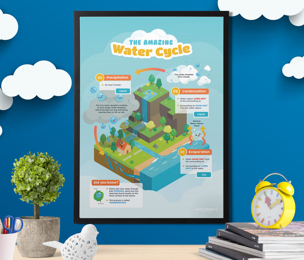 Water Cycle: From Top to Bottom