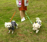Automatic Two-headed Dog Leash - Pet Smile Store