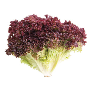 Lollo Rosso lettuce northern ireland - Fruit2 Go