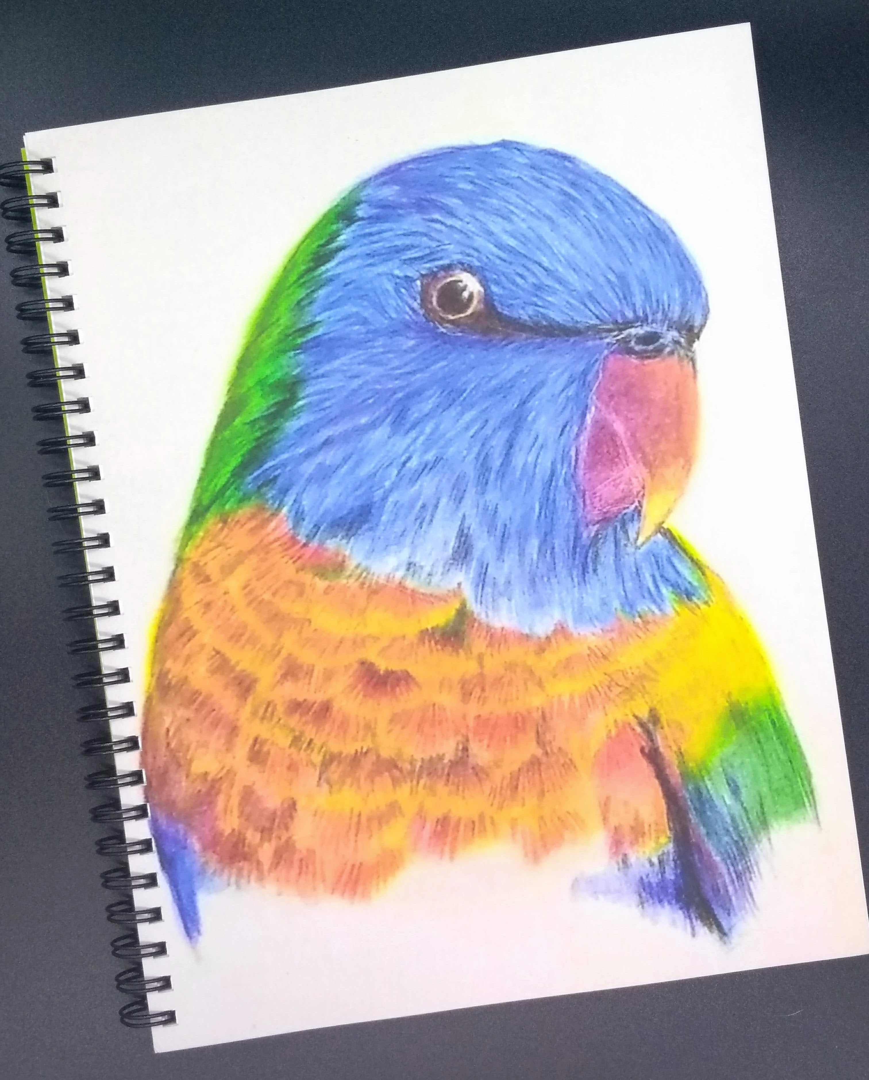 Denik Wirebound Notebook-Rainbow Lorikeet