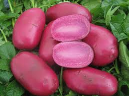 Adirondak Red Potatoes