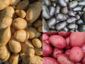 Bags of Potatoes-Choice of Color Variety