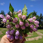 Load image into Gallery viewer, Comfrey Flower Essence