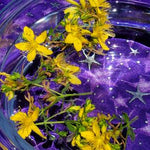 Load image into Gallery viewer, St. John's Wort Flower Essence