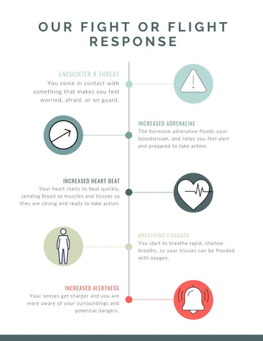 Fight or Flight Response Infographic