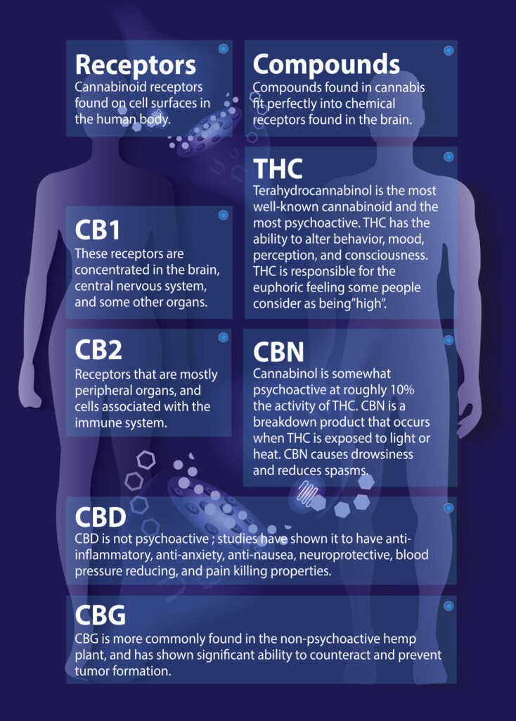 Printhuman endocannabinoid system is infographic backgrounds.