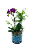 Mini Tropical Orchid Plant