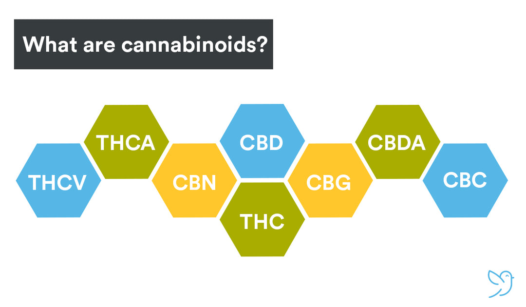 What Are Cannabinoids and How Do They Work?