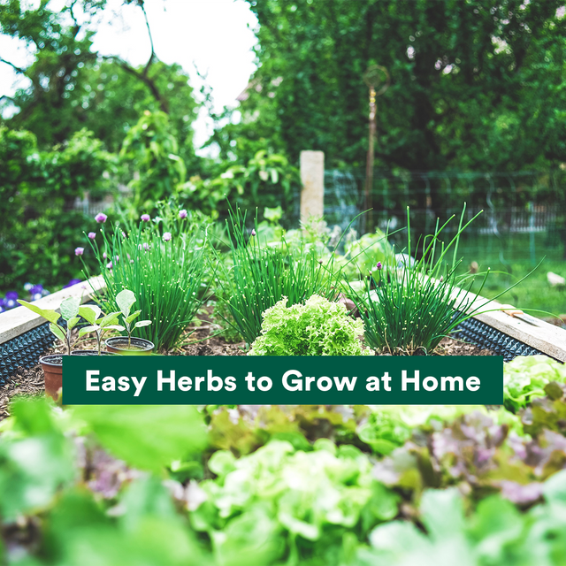 Easy Herbs to Grow at Home